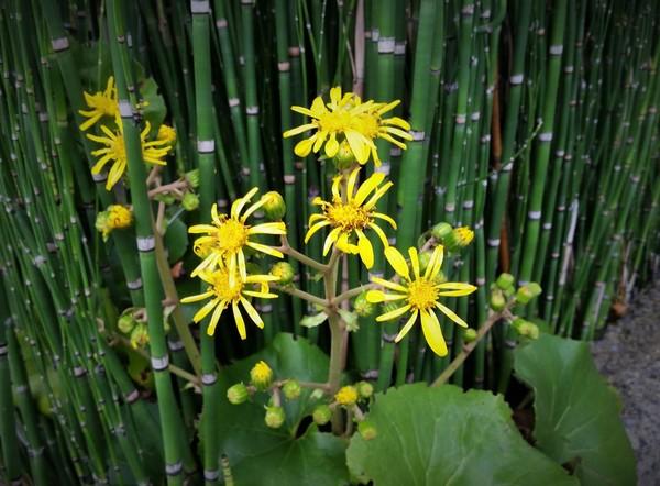 秋に咲くサムネイル