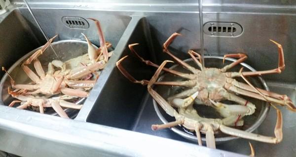かに蟹カニサムネイル